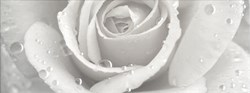 STG/A289/15000 Декор Уайтхолл Роза 15х40х8 - фото 18746